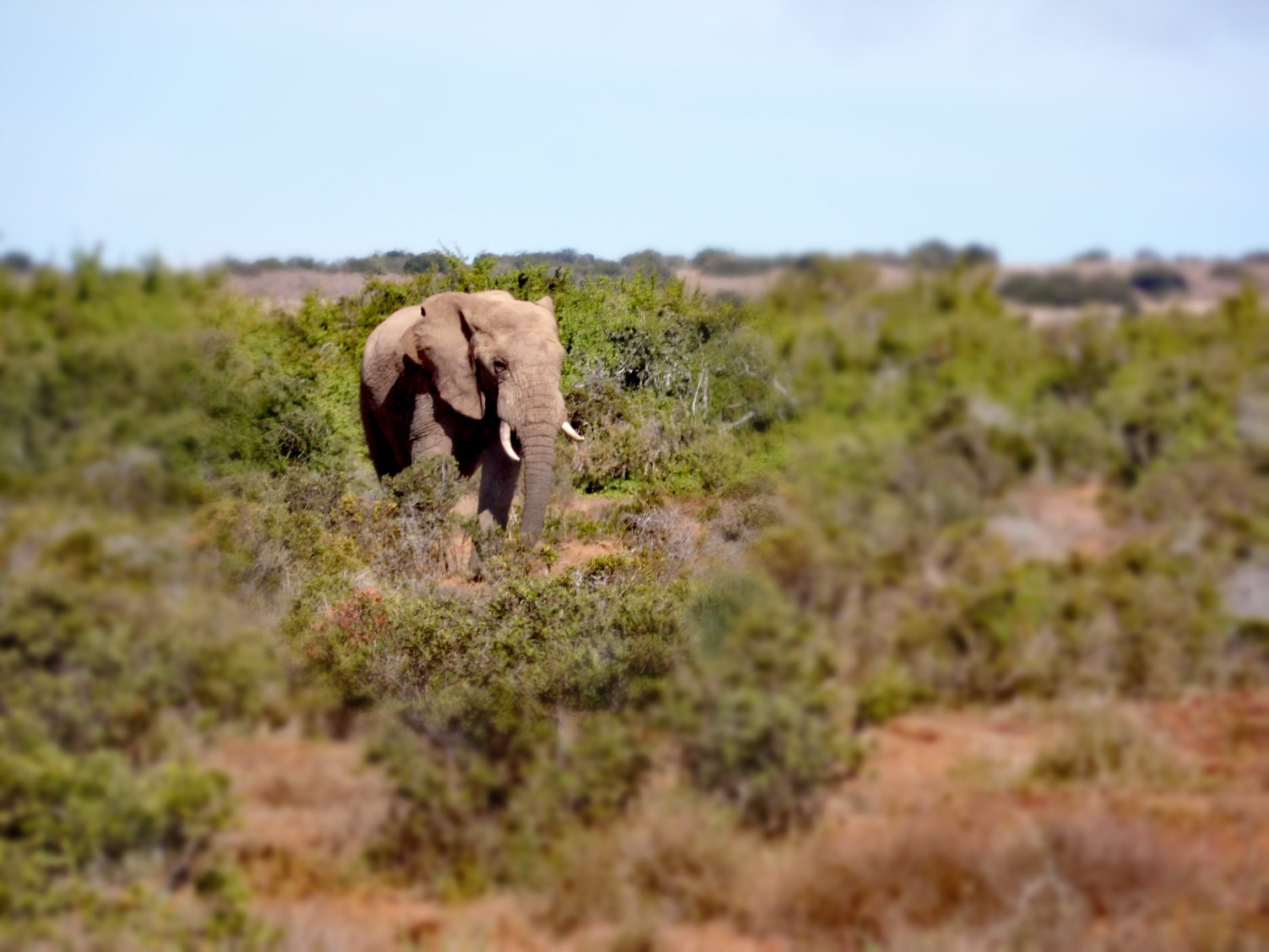 Reasons to Visit Addo Elephant Park - By Megan Kelly